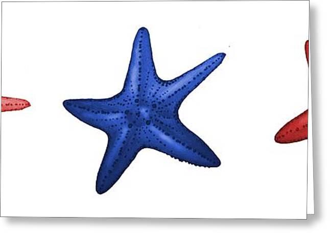 Nautical Starfish Panoramic Illustration Greeting Card