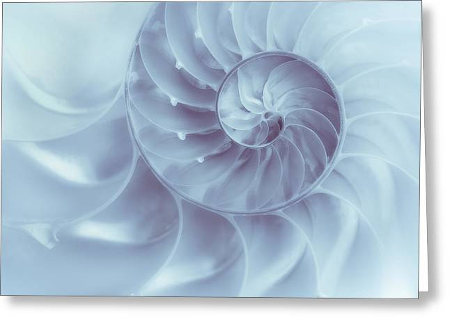 Nautilus - Dreaming Of The Sea Greeting Card