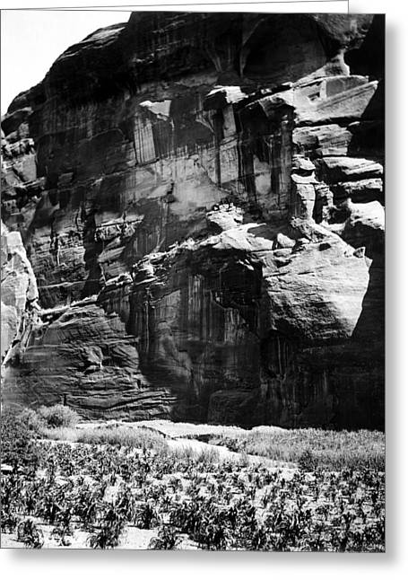 Navajo Corn Fields, C1906 Greeting Card by Granger