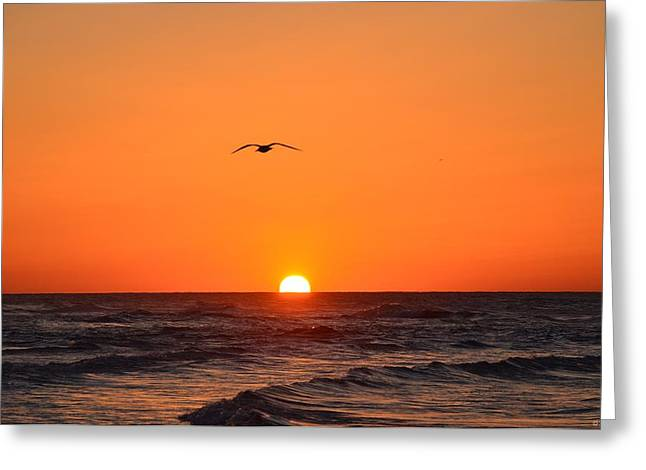 Navarre Beach Sunrise Waves And Bird Greeting Card