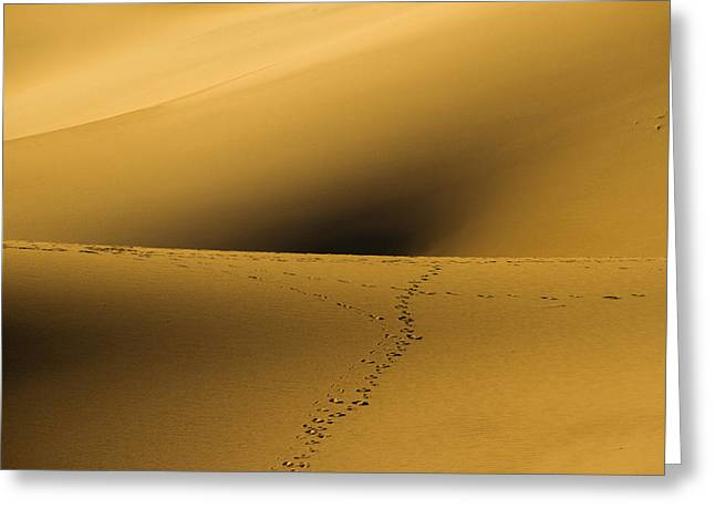 Navel Of The Dunes Greeting Card