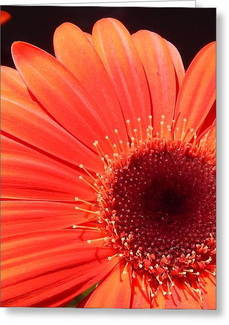 Ncpl0155-007 Greeting Card by Kimberlie Gerner