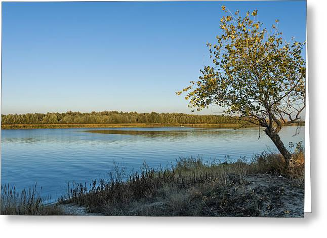 Near River Greeting Card by Svetlana Sewell
