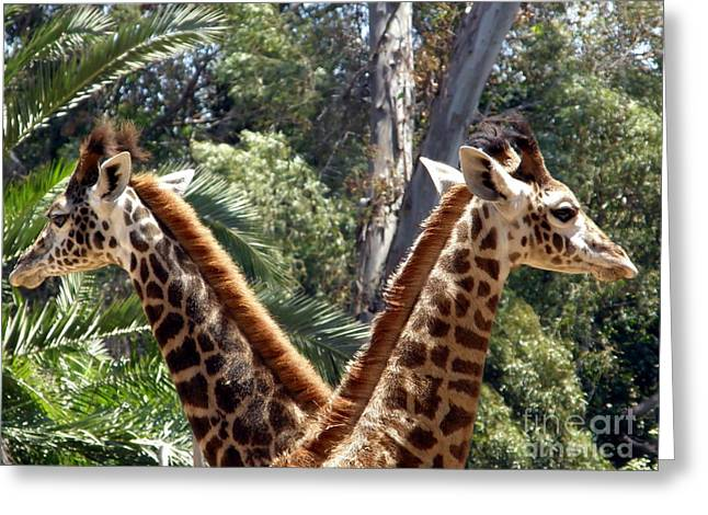 Neck To Neck Greeting Card by Sophie Vigneault