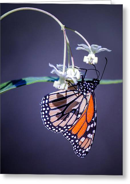 Nectar Greeting Card by Brad Grove