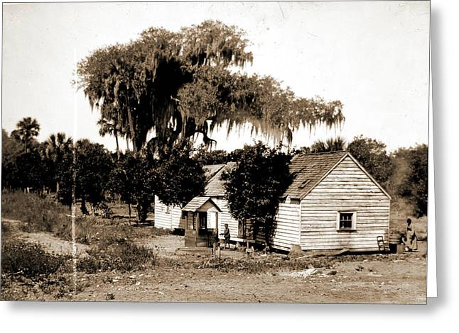 Negro Cabin And Oaks, Florida, Jackson, William Henry Greeting Card by Litz Collection