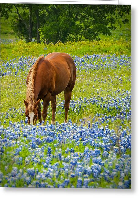 Nelly Grazing Among The Bluebonnets Greeting Card by Dee Dee  Whittle