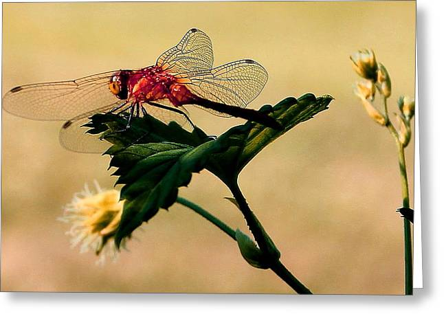 Neon Dragonfly Greeting Card by Mavis Reid Nugent