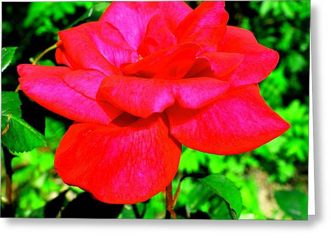 Neon Red Rose Greeting Card by Mavis Reid Nugent