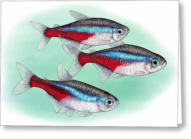 Neon Tetras Greeting Card by Roger Hall