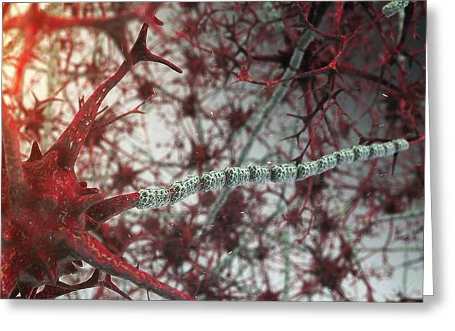 Nerve Cells Greeting Card
