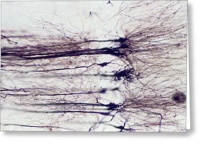 Nerve Cells Greeting Card