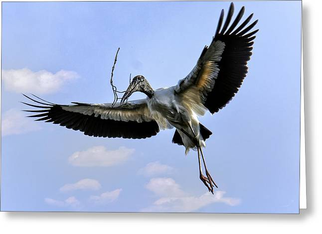 Nest Building Woodstork Greeting Card