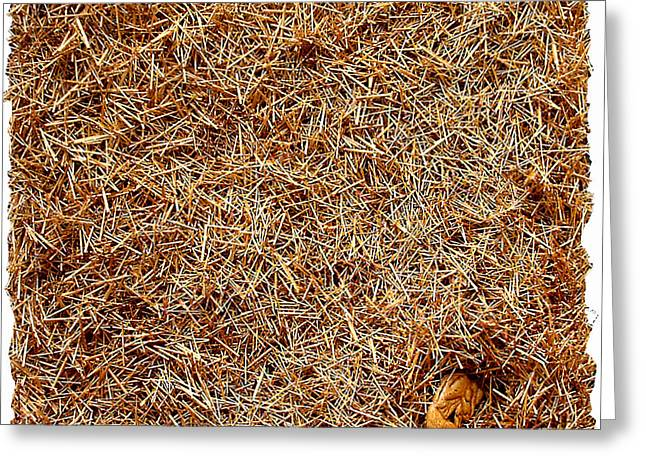 Nest Greeting Card by Daniel P Cronin