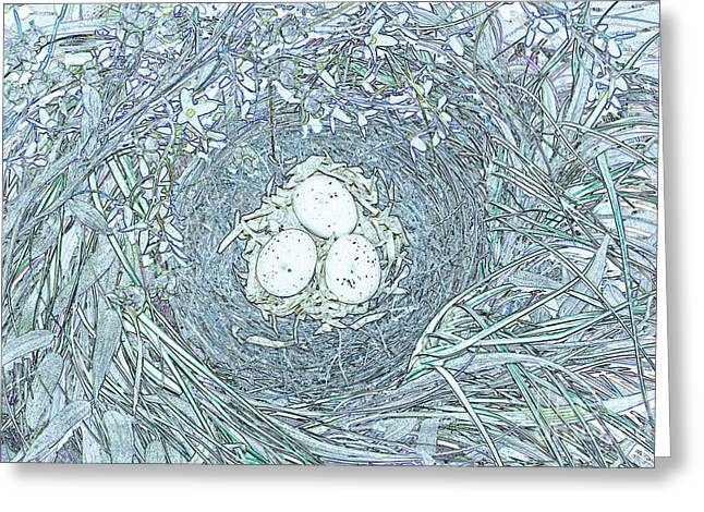 Nest Eggs By Jrr Greeting Card by First Star Art