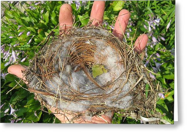 Greeting Card featuring the photograph A Nest In Hand by Bruce Carpenter