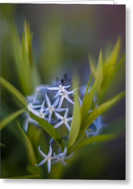 Nest Of Blue Stars Greeting Card