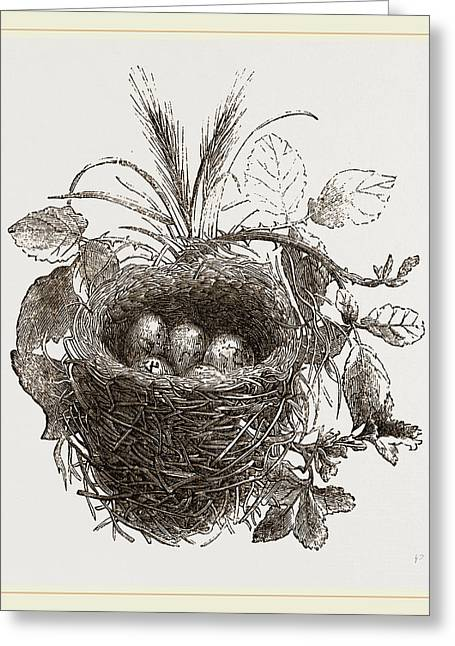 Nest Of Yellow-hammer Greeting Card