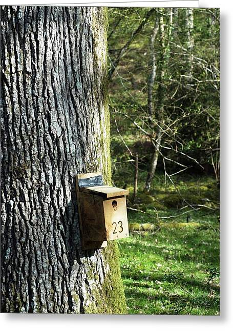 Nesting Box Greeting Card