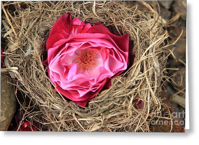 Nesting Rose Greeting Card
