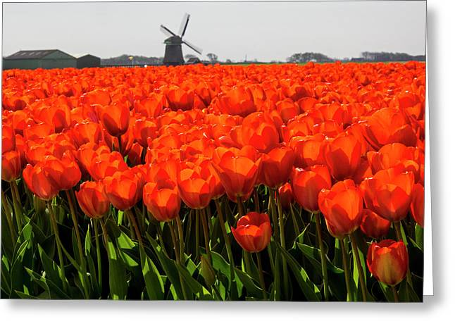 Netherlands, Nord Holland, Field Greeting Card
