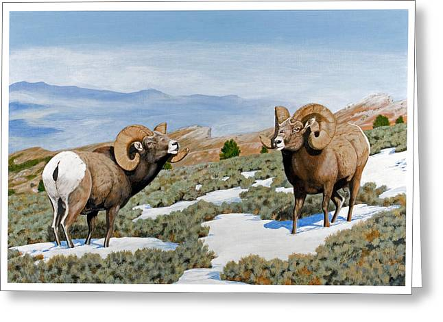 Nevada Rocky Mountain Bighorns Greeting Card