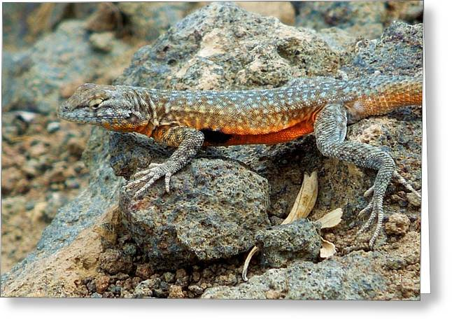 Greeting Card featuring the photograph Nevada Side-blotched Lizard by Heidi Manly