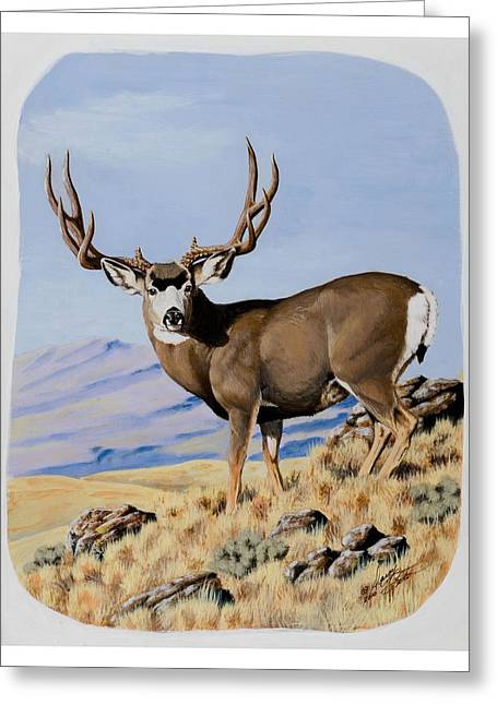 Nevada Typical Mule Deer Greeting Card