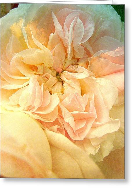 Never A Rose Like You Greeting Card by Shirley Sirois