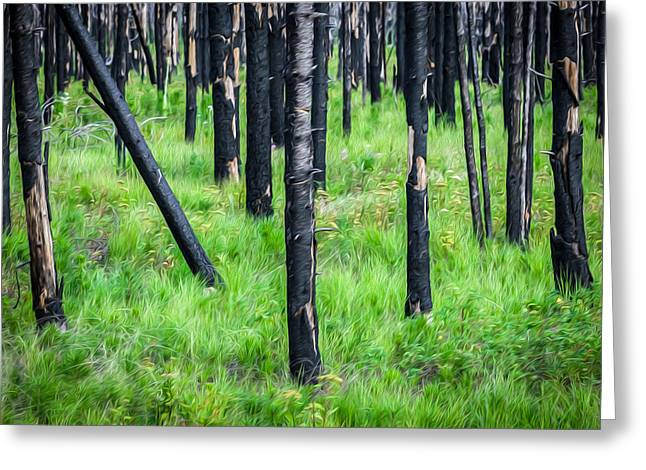 New And Old Burnt Trees And New Grass Glacier National Park Greeting Card by Rich Franco