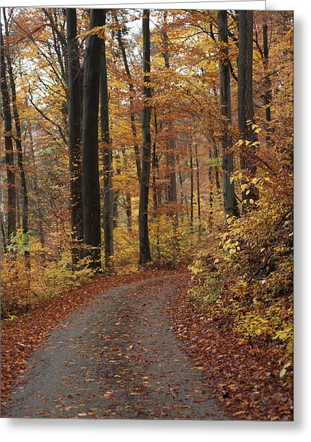 New Autumn Trails Greeting Card