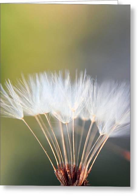 New Day Greeting Card by Kelly Howe