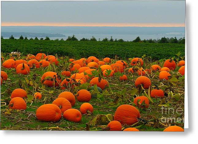 New England Pumpkin Patch Greeting Card by Eclectic Captures