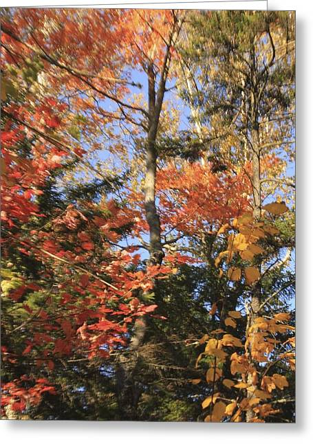 New England Trees Greeting Card