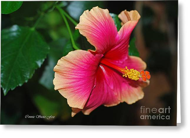 New Every Morning - Hibiscus Greeting Card by Connie Fox