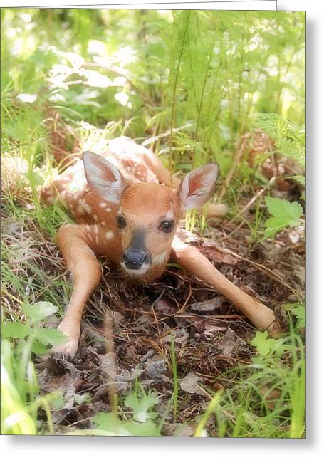 New Fawn In The Forest Greeting Card