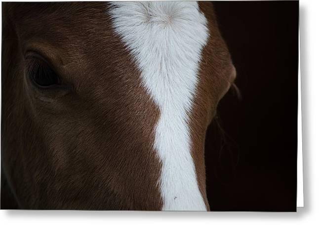 New Filly Greeting Card by Kelly Kitchens