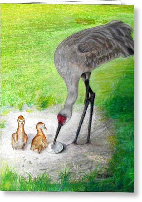 New Hatchlings Sandhill Crane Chicks Greeting Card by Zina Stromberg