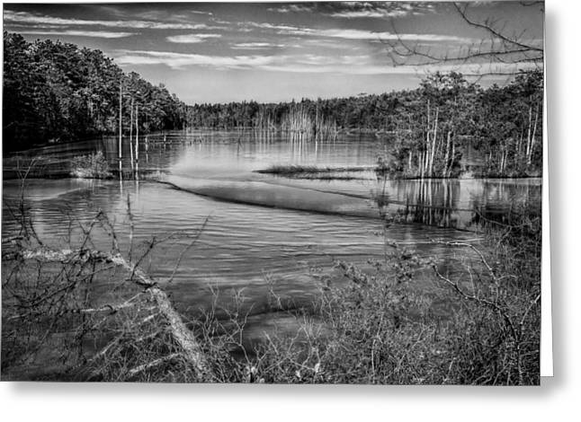 New Jersey Pinelands Greeting Card by Louis Dallara