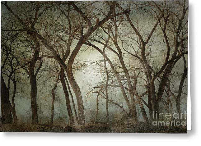 New Mexico Winter Woodland Greeting Card by Andrea Hazel Ihlefeld