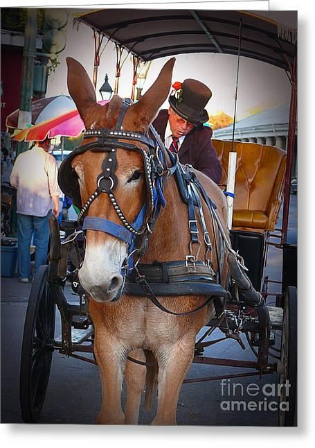 New Orleans Mule Carraige Greeting Card
