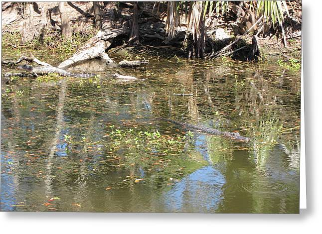 New Orleans - Swamp Boat Ride - 121251 Greeting Card by DC Photographer