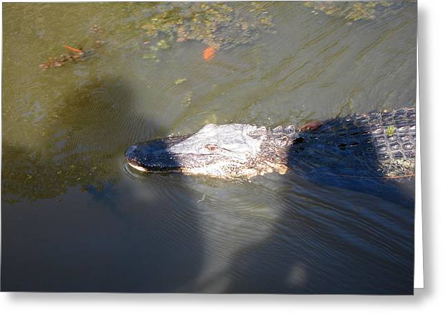 New Orleans - Swamp Boat Ride - 121257 Greeting Card