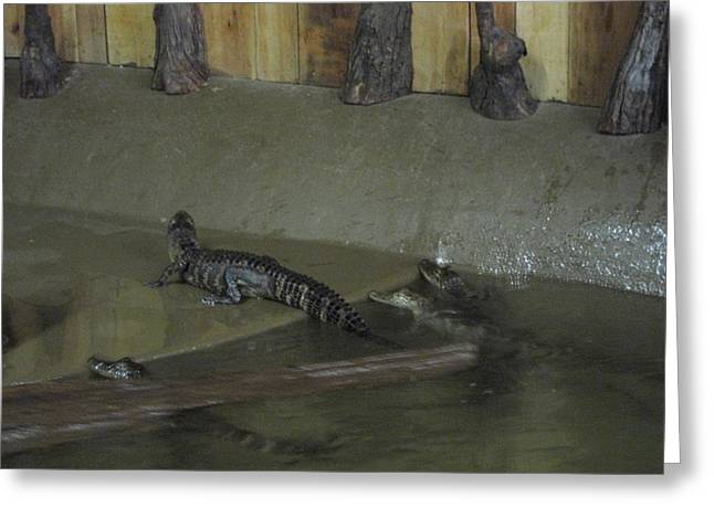 New Orleans - Swamp Boat Ride - 12126 Greeting Card by DC Photographer