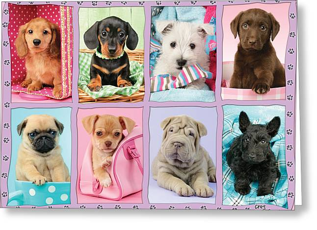 New Puppy Multipic Greeting Card by Greg Cuddiford
