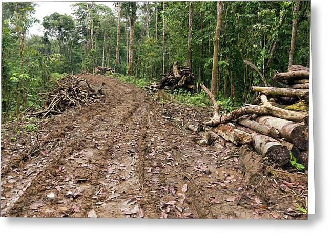 New Road Cut Through Tropical Rainforest Greeting Card by Dr Morley Read