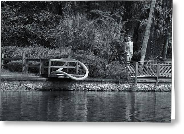New Silver Springs State Park Greeting Card by Warren Thompson