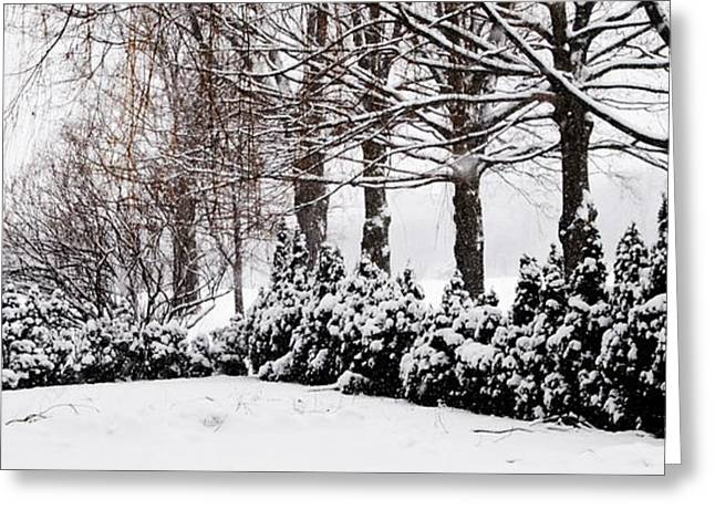 New Snow - Evergreens Greeting Card