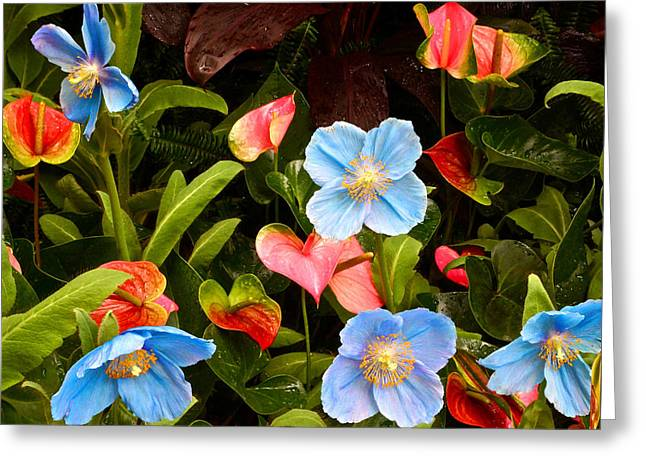 New World And Old World Exotic Flowers Greeting Card by Byron Varvarigos