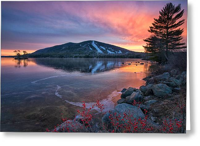 New Years Day Sunset With Berries Greeting Card